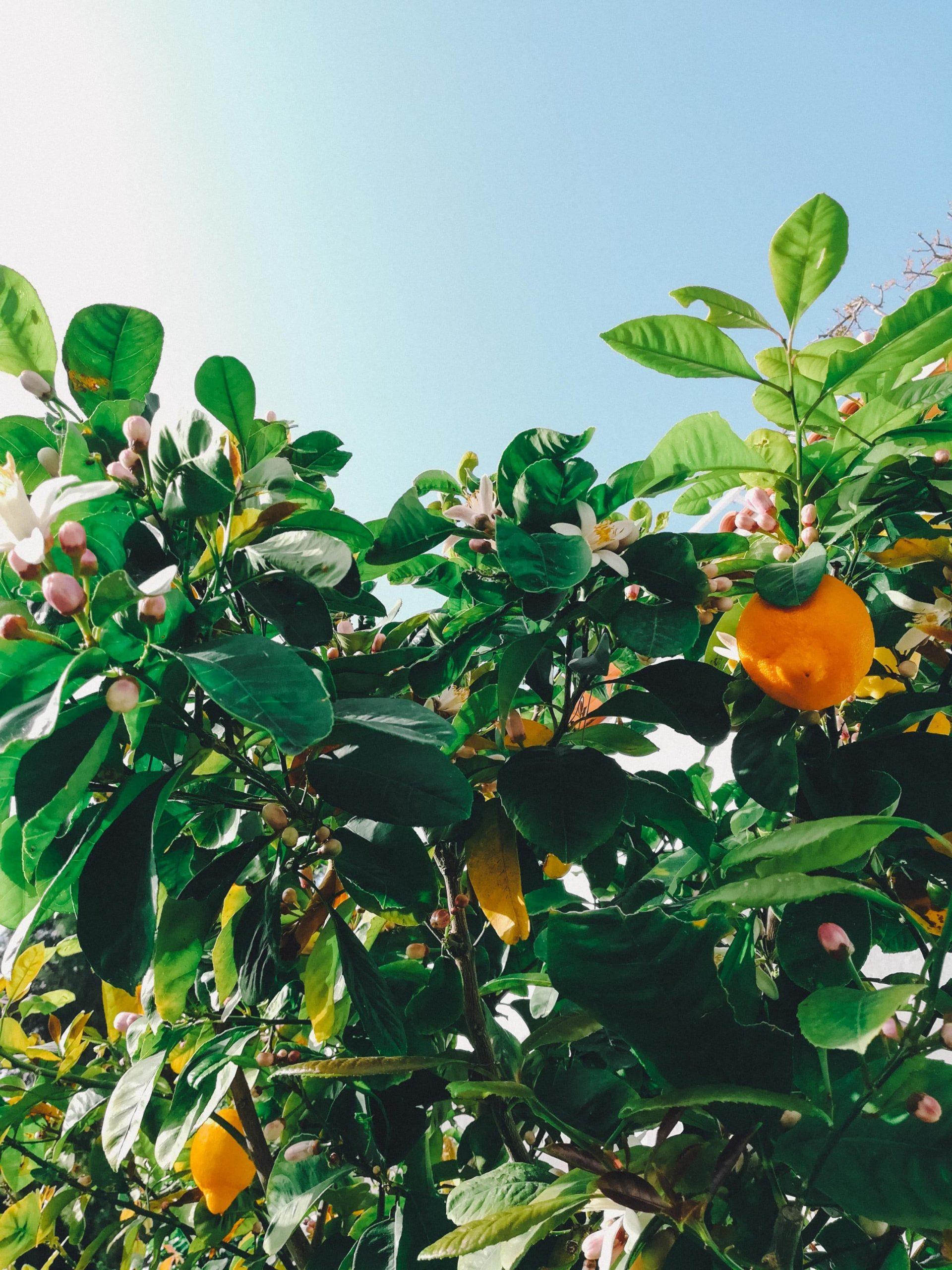 Greek Island Yoga Retreat Lemons